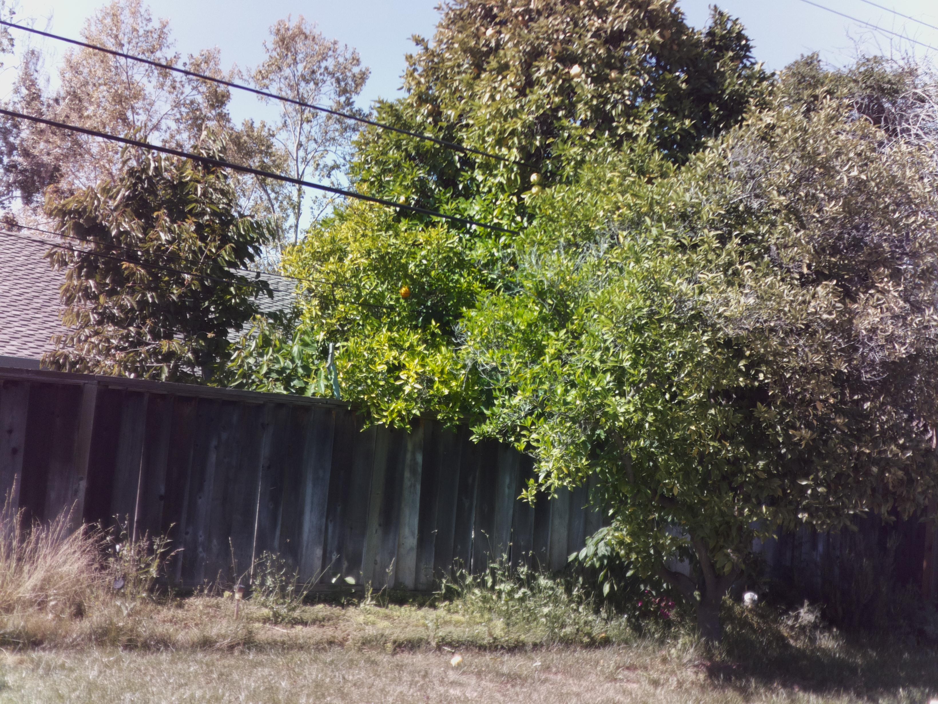 Raspberry Pi Camera RAW photos